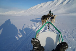 On the dog sled