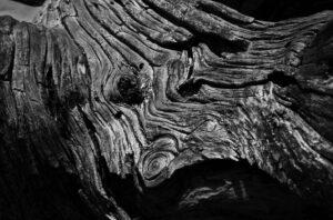 A dead juniper trunk.