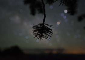 Pine needles and Milky Way.