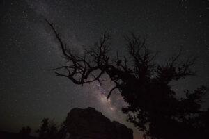 Bright Angel Point tree