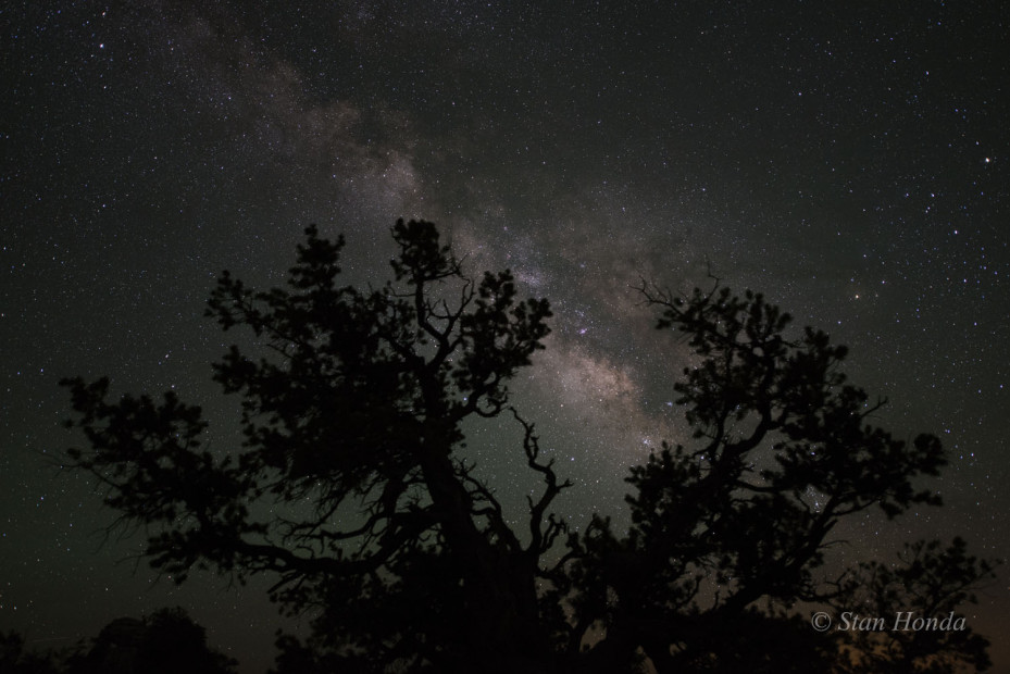 Pinyon and Milky Way