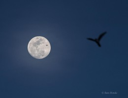 Moon, plane and bird.