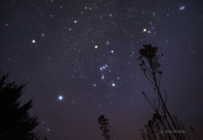 Orion dominated the south sky in March, with the bright stars Sirius (lower left), Procyon (upper left), orange Aldebaran (above plant) and The Pleiades (upper right).