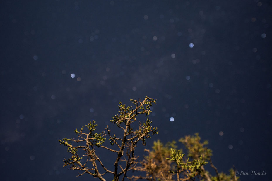 Angel Peak, NM- Juniper branches and the Summer Triangle