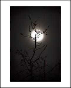 40-16×24-parks-NM-moon-plantf