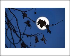45-16×24-NY-moon-leaf-dec2016f