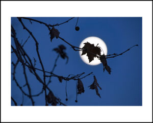 57-20×30-NY-moon-leaf-dec2016f